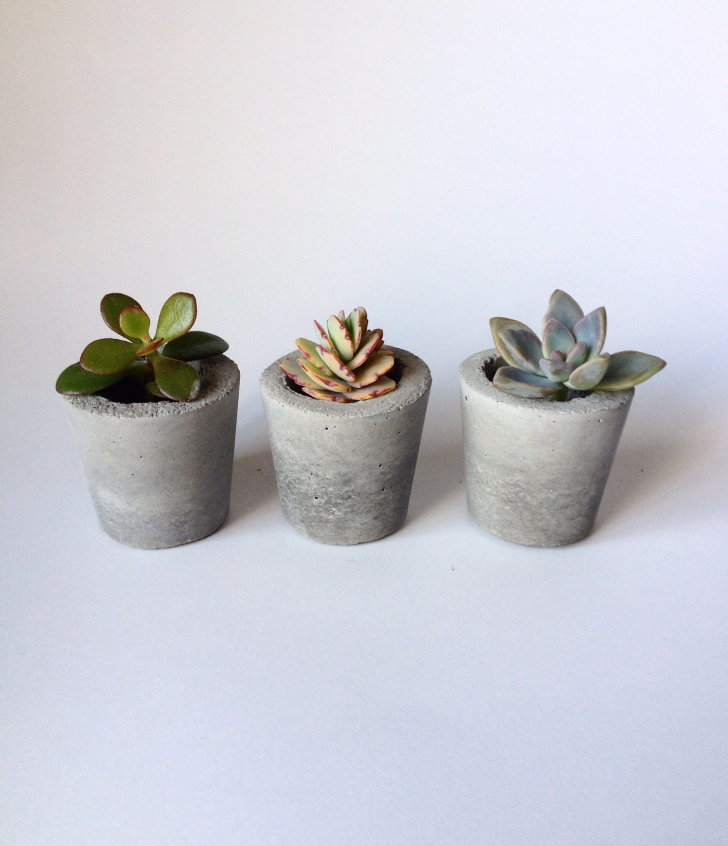 20 Reasons Why Succulents Are Awesome!